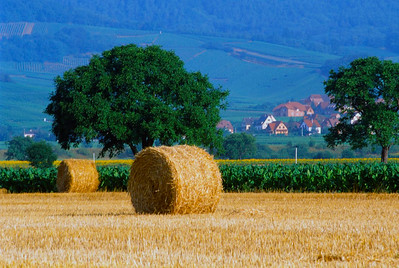 Alsatian Farm Land