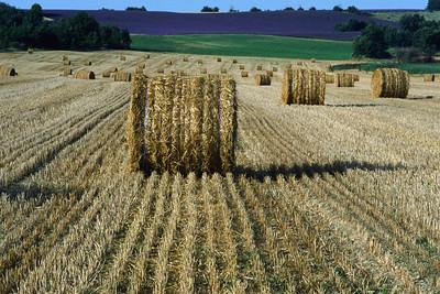 Harvesting the Hay