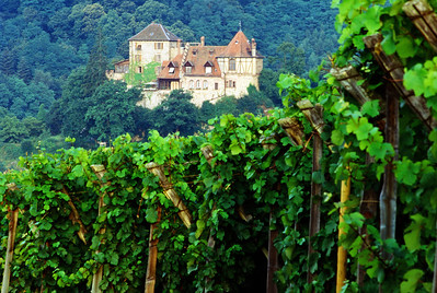 The Vineyard and Chateau