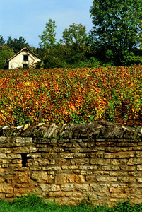 Old Working Vineyard