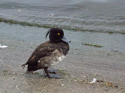 2006-08-04_14-20-48_foss