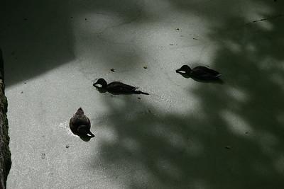 2006-08-11_10-09-35_foss