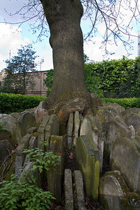 The Hardy Tree St Pancras Old Church London, England