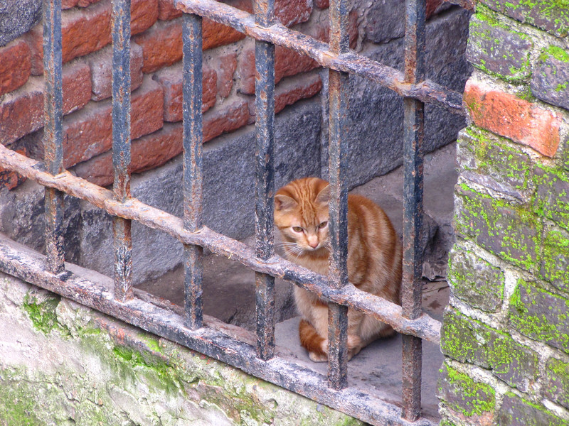 Cats living in the Castello Sforzesco