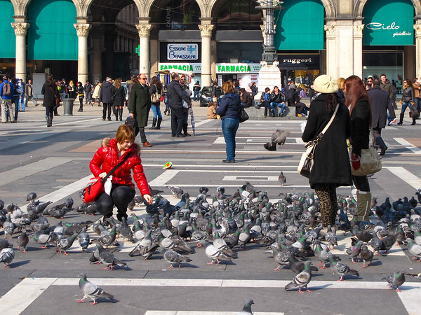 Crazy pigeons and even crazier people playing with them in Piazza Duomo