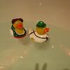 German ducks!!