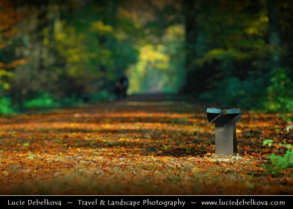 Netherlands - Warm Autumn in Utrecht Surrounding - Beautiful colors in Dutch Forest <br /> <br /> Camera Model: NIKON D70; Lens: 72.00 - 210.00 mm f/2.8; Focal length: 210.00 mm; Aperture: 4.0; Exposure time: 1/250 s; ISO: 250
