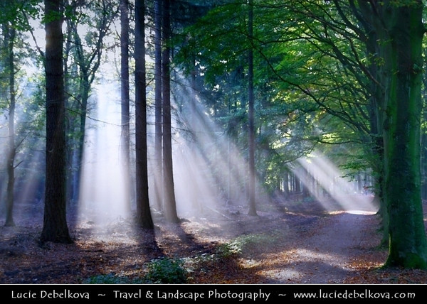 Netherlands - Magic Light - Sunrays shining through the trees in Lage Vuursche Forest <br /> <br /> Camera Model: Canon EOS 350D DIGITAL; Lens: 18.00 - 200.00 mm; Focal length: 59.00 mm; Aperture: 5.0; Exposure time: 1/13 s; ISO: 100