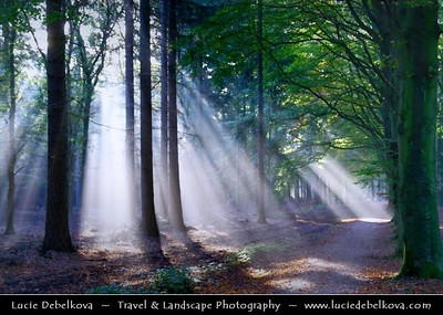 Netherlands - Magic Light - Sunrays shining through the trees in Lage Vuursche Forest   Camera Model: Canon EOS 350D DIGITAL; Lens: 18.00 - 200.00 mm; Focal length: 59.00 mm; Aperture: 5.0; Exposure time: 1/13 s; ISO: 100