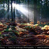 Netherlands - Magic Light - Sunrays shining through the trees in Lage Vuursche Forest <br /> <br /> Camera Model: Canon EOS 350D DIGITAL; Lens: 18.00 - 200.00 mm; Focal length: 18.00 mm; Aperture: 4.0; Exposure time: 1/50 s; ISO: 100