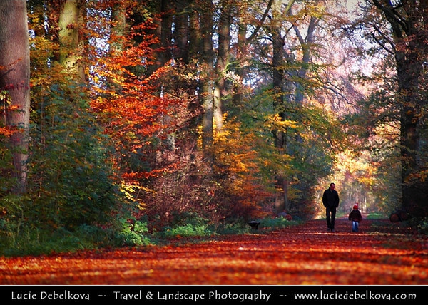 Netherlands - Warm Autumn in Utrecht Surrounding - Beautiful colors in Dutch Forest <br /> <br /> Camera Model: NIKON D70; Lens: 72.00 - 210.00 mm f/2.8; Focal length: 210.00 mm; Aperture: 3.5; Exposure time: 1/200 s; ISO: 250