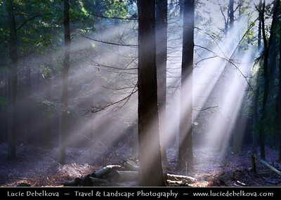 Netherlands - Magic Light - Sunrays shining through the trees in Lage Vuursche Forest   Camera Model: Canon EOS 350D DIGITAL; Lens: 18.00 - 200.00 mm; Focal length: 59.00 mm; Aperture: 5.0; Exposure time: 1/15 s; ISO: 100