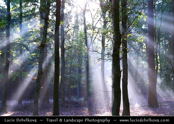 Netherlands - Magic Light - Sunrays shining through the trees in Lage Vuursche Forest <br /> <br /> Camera Model: Canon EOS 350D DIGITAL; Lens: 18.00 - 200.00 mm; Focal length: 48.00 mm; Aperture: 5.0; Exposure time: 1/15 s; ISO: 100