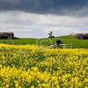 World War II German costal artillery emplacements and a gent driving a BMW R12 Wehrmacht Motorrad German motorcycle in juxtaposition to todays' fields of flowering mustard.<br /> <br /> Normandy, France<br /> <br /> ~ Image by Martin McKenzie All Rights Reserved ~