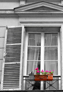 Window flower box composition study, Cadet, Paris, May 2007
