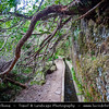Europe - Portugal - Portuguese archipelago - Madeira Island - Ribeiro Frio to Portela Levada - Walk along one of the most beautiful and known levadas (irrigation channel and water canal) of Madeira surround by Laurissilva Forests