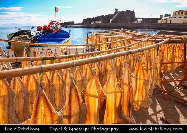 "Europe - Portugal - Portuguese archipelago - Madeira Island - South Coast - Câmara de Lobos - Traditional fishing village on shores of Atlantic Ocean situated five kilometres from Funchal - Cat fish drying - Known as the ""cod fish"" of Câmara de Lobos - Local fishermen dry the fish in the fresh air"