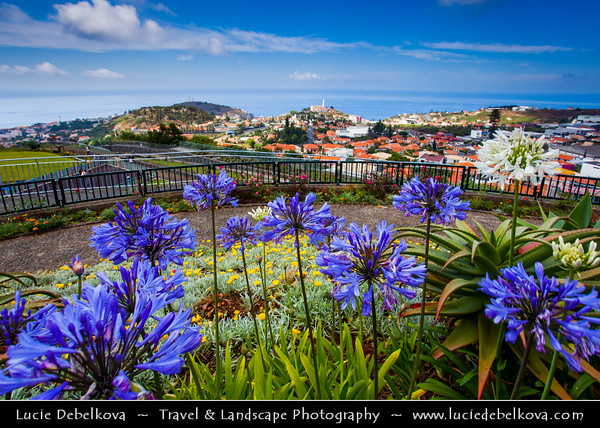 Europe - Portugal - Portuguese archipelago - Madeira Island - South Coast - Funchal - Miradouro Pico Dos Barcelos - Stunning viewpoint situated at 355 meters over the city