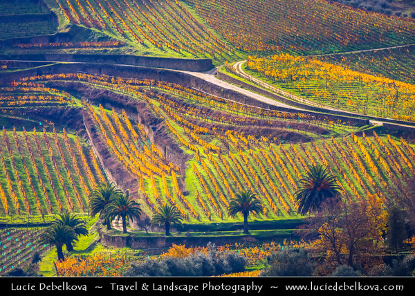 Europe - Portugal - Região Norte - North Region - Douro Valley - UNESCO World Heritage Site - Port wine producing region along Douro river with oldest vineyards planted on traditional terraces supported by dry stone walls
