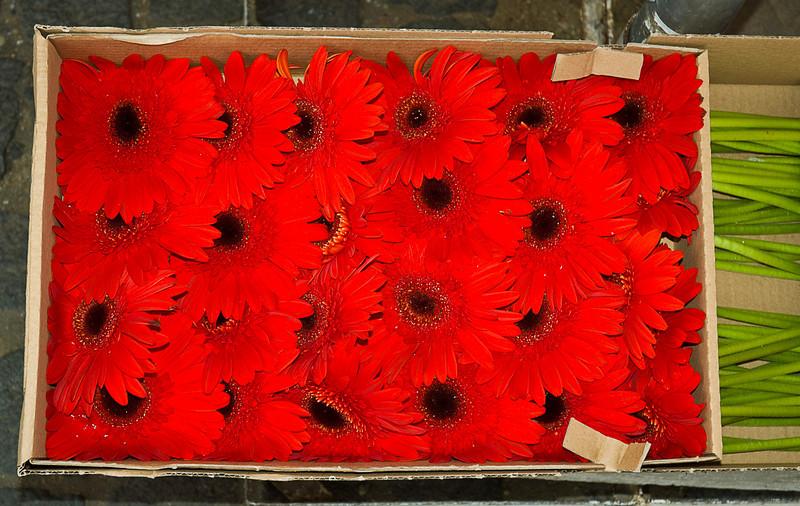 Gerbera Daisies, street flower vendor