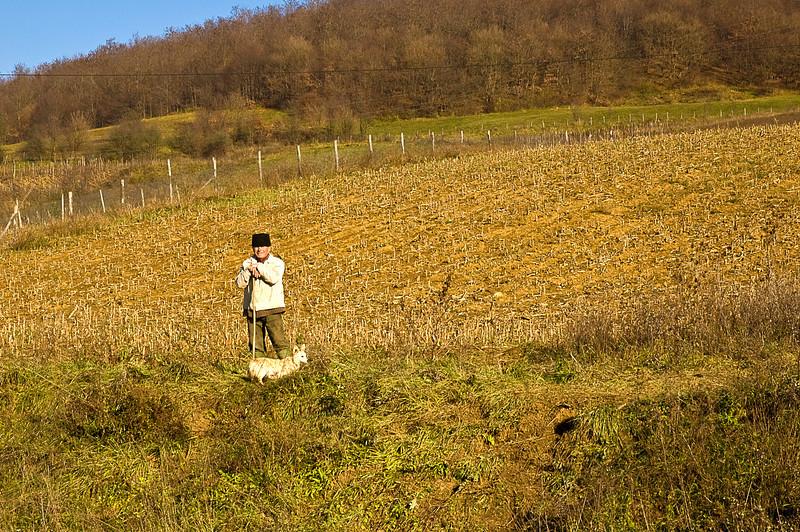 Transylvanian farmer with his dog observes strange visitors.