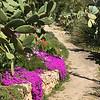 Ice plants and cactus, feels just like Arizona!