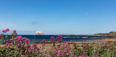 Bass Rock with Magenta