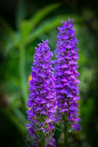 Purple Stacks
