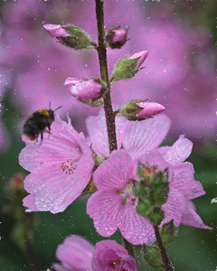 Pinks in the Rain