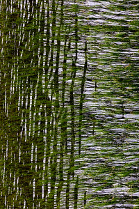 Flowing Grasses