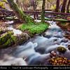 Europe - Serbia - Republika Srbija - Tara National Park - Bajina Bašta - Perućac - Vrelo - Right tributary of river Drina - River is only 365 meters long & one of shortest rivers in world