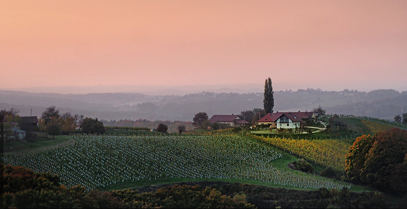 Vineyards in Jeruzalem