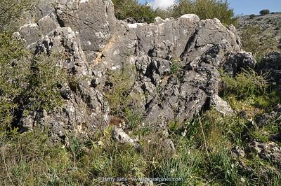 habitat Narcissus pannizianus