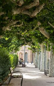 Beneath the Branches,Catalunya, Spain, 2012