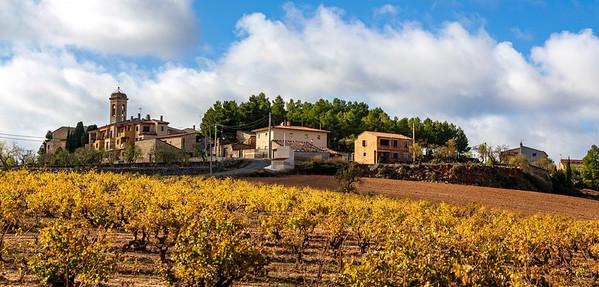Vineyard, Tarragona, Spain, 2019