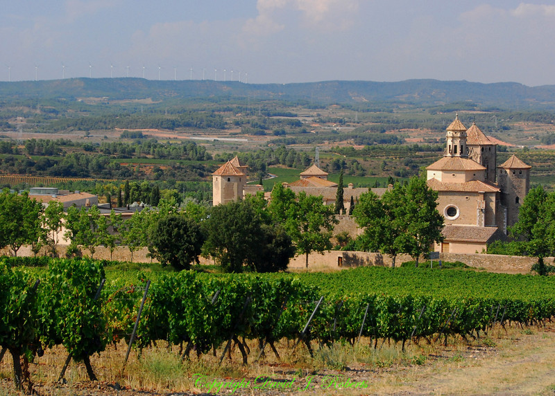 Vineyards of the Poblet Monestary, Spain