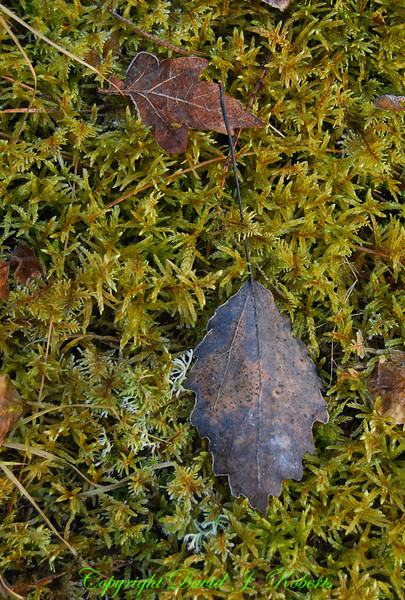 Leaves and Moss, Sweden