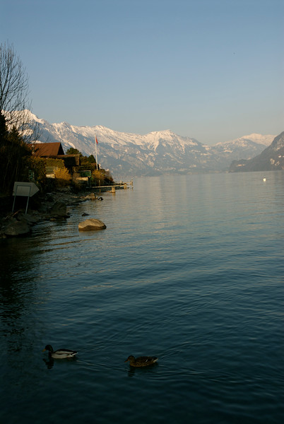 Lake Brienz as seen at Niederried.