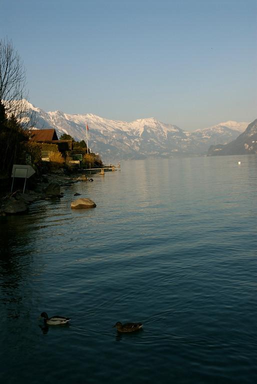 Lake Brienz as seen at Niederried.