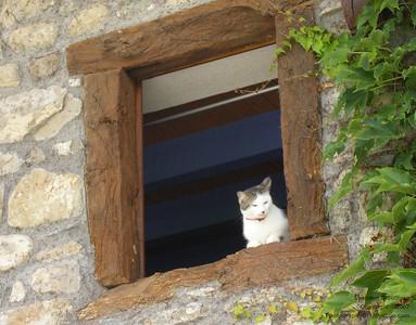 L'apres midi d'un chat