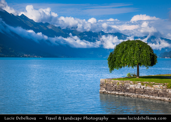 Europe - Switzerland - Swiss - Alps - Alpen - Alpi - Alpes - Great Mountain Range in Europe - Brienz Lake - Interlaken - Lonely tree on shores of the lake with steep Alp mountains in backdrop