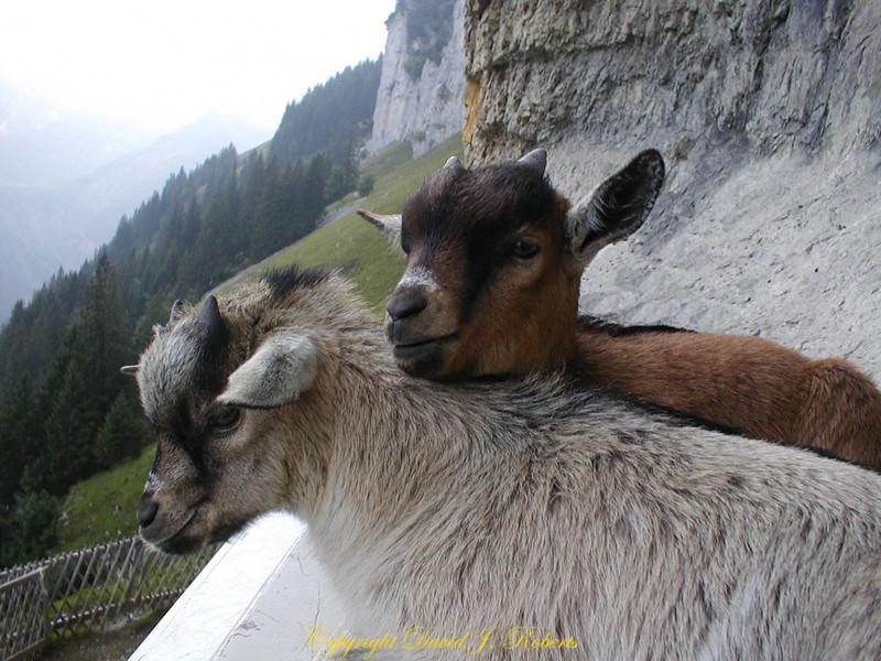 A couple of kids.. Ebenalp, Switzerland