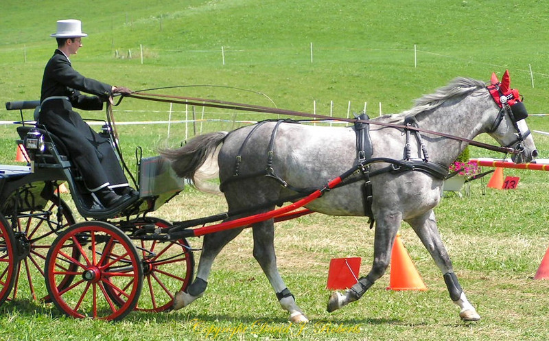 Carriage driving competition in Einsiedeln, Switzerland
