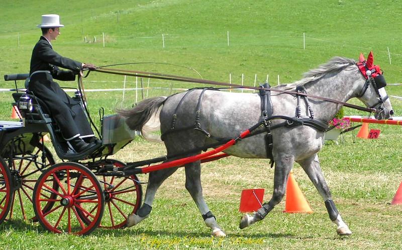 Carriage driving competition in Einsiedeln, Switzerland