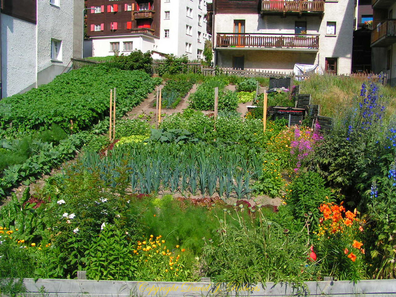 Home gardens grown between the chalets and feed families and restaurant goers, Zermatt, Switzerland