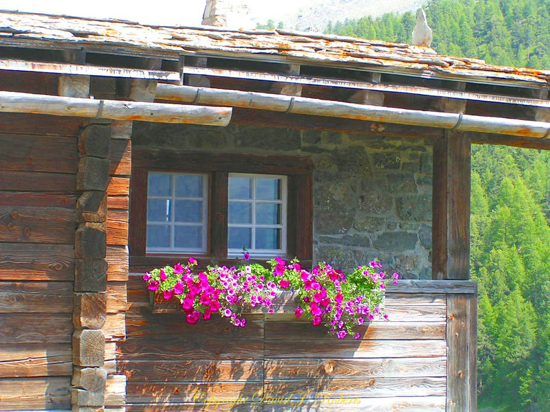 Planters on old family home, Findeln, Zermatt, Switzerland