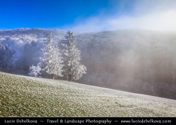 Europe - Switzerland - Swiss - Solothurn Canton - Jura Mountains - Juragebirge - Massif du Jura - Sub-alpine mountain range located north of the Western Alps - Area around Ruins of Frohburg Castle - Hilly snowy winter landscape with trees under heavy frost