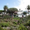 The 1000 year-old dragon tree in Icod de los Vinos, Tenerife.