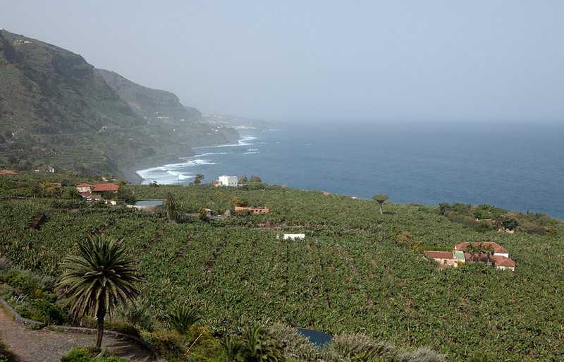 Banana plantations on the west coast near Icod de los Vinos.