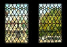 The view through two stained glass windows in the landmark Bruges Town Hall. The background of a building and tree in Burg Square is rendered in indistinct, almost impressionistic tones, through distortions from the old panes.